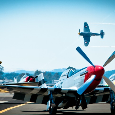Hawker Sea Fury fly by. P-40 Warhawk and P-51 Mustangs in the foreground