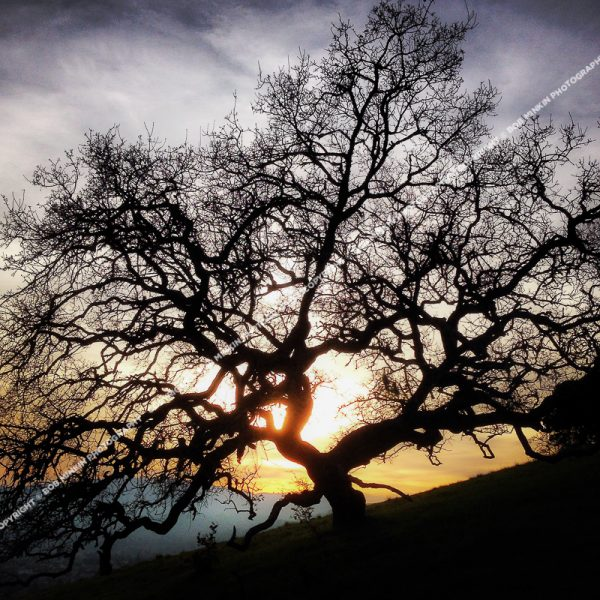 Mt. Burdell—Novato, Marin County, CA